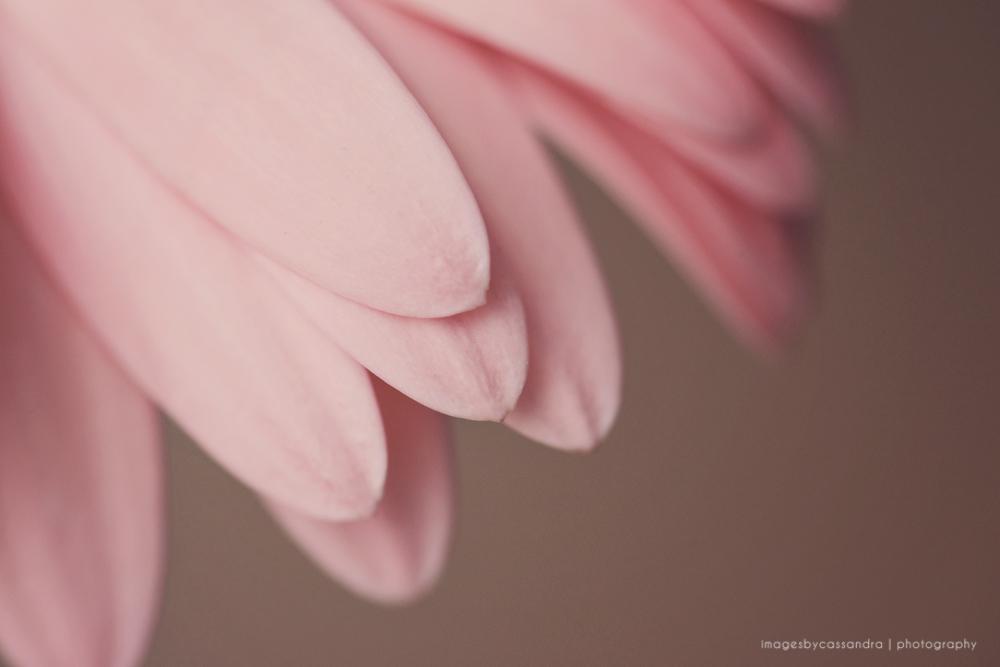 gentle pink...