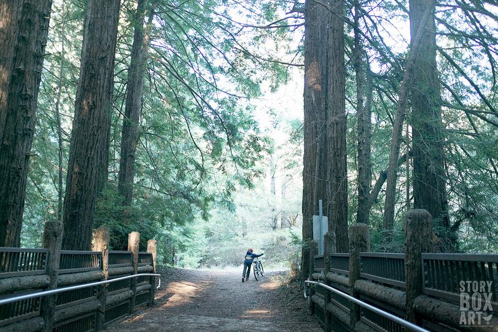 redwoods storyboxart