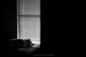 Peaceful-By-Lindsay-Moeser-of-Rosalyn-Charles-Photography-01