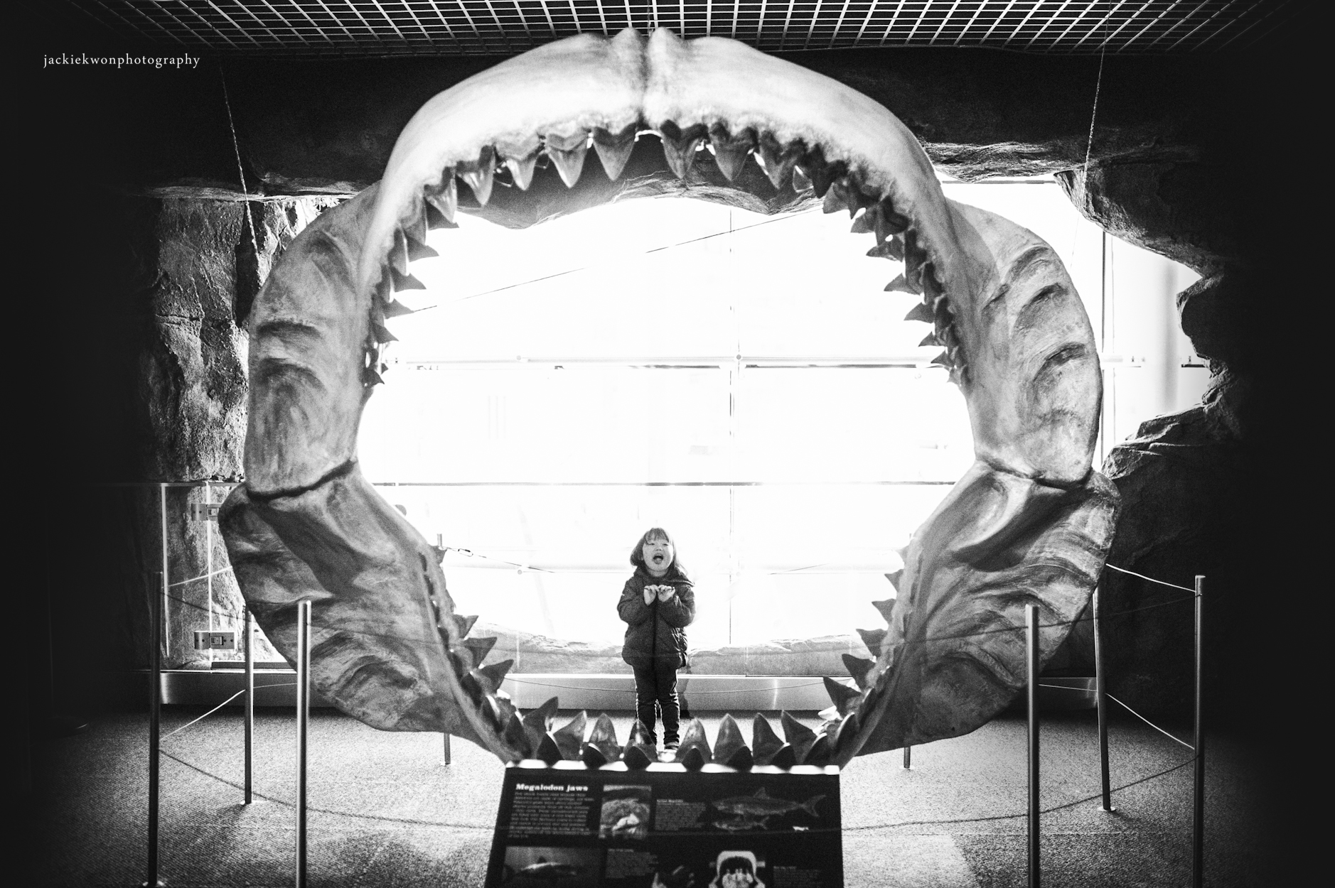 jaws-10