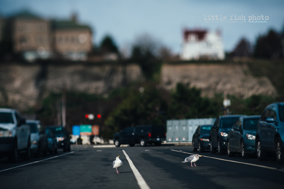 seagull strutting down road