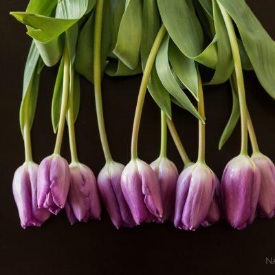 nadeen_flynn_still_life_tulips