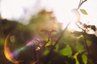 new-leaves-on-rose-bush-in-beautiful-light-by-photographer-maria-russell