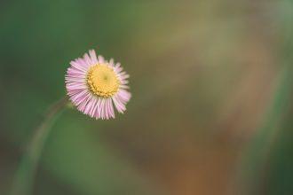 wildflower macro tiffany kelly