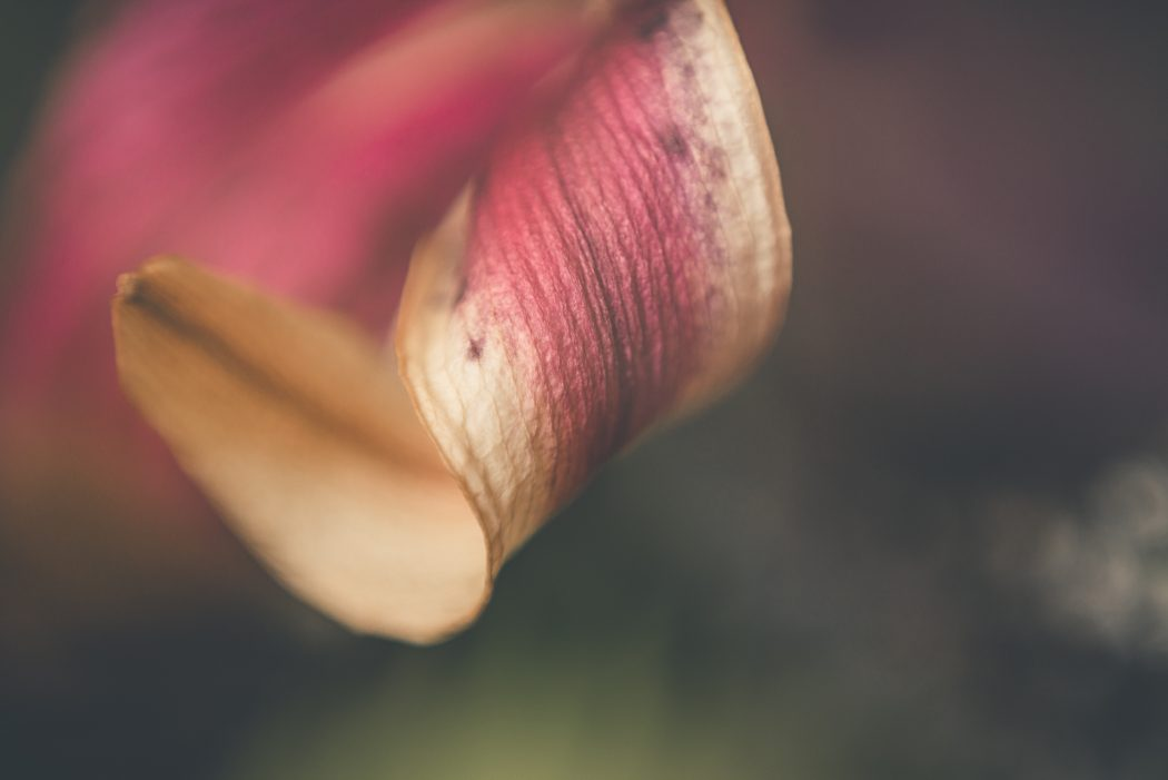 tiffany kelly macro lily freelens