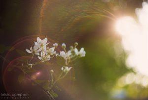 Dramatic Light-flare