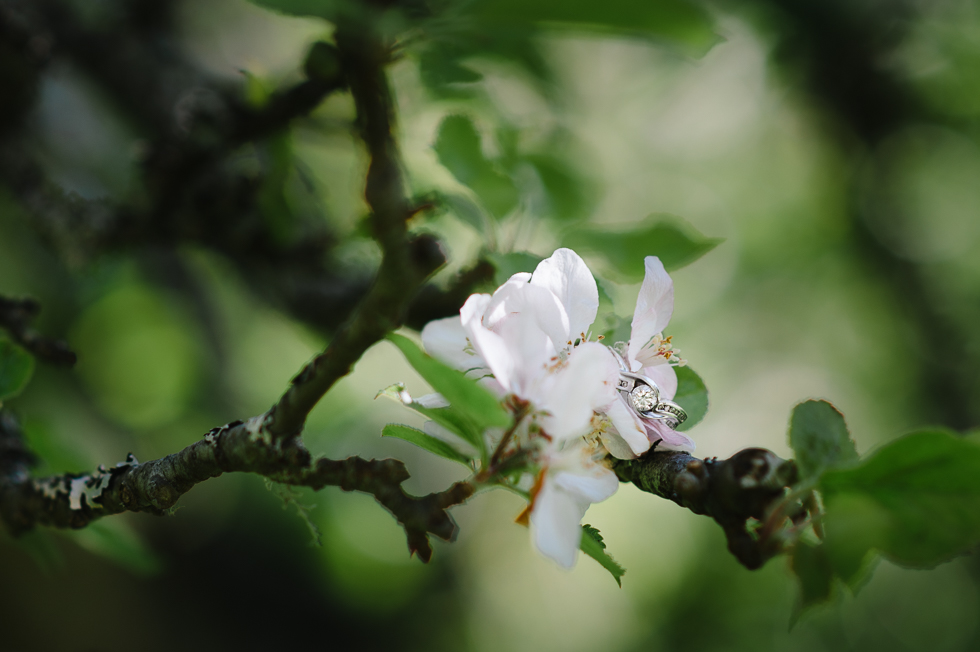 Not understand ebony cherry blossoms are not