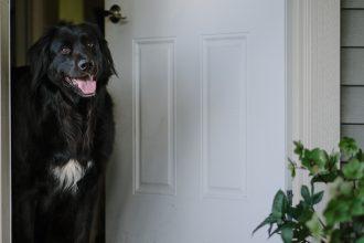 ebony-logins-dog-cooper