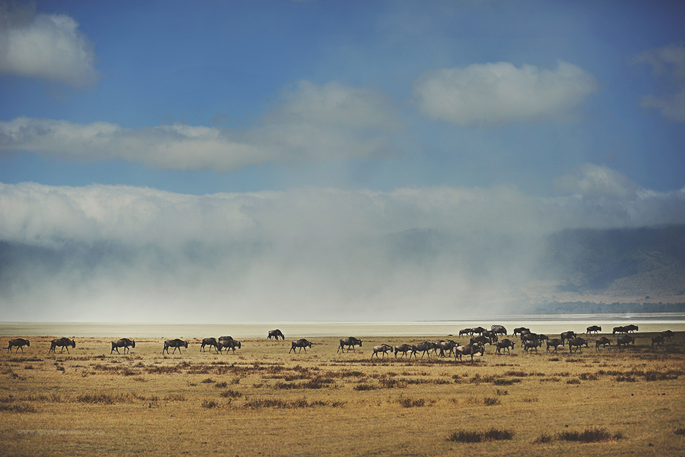 The great migration Tanzania