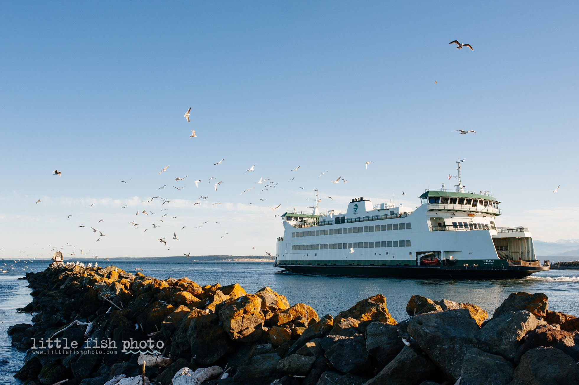 Seagulls Scatter as ferry leaves port