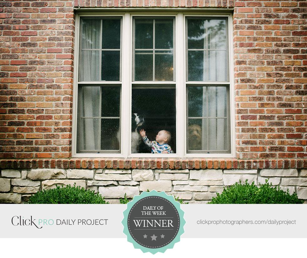 dog-in-window-by-Casey-McCauley