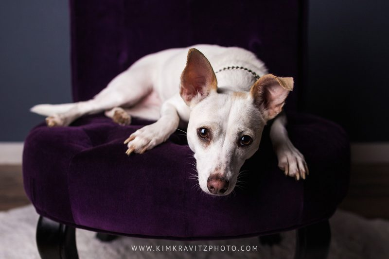 Bella Vista Arkansas Pet Photography by Kim Kravitz