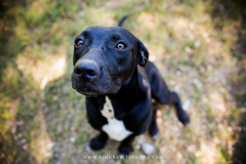 Bella Vista Arkansas Animal Shelter Pet Photography Kim Kravitz