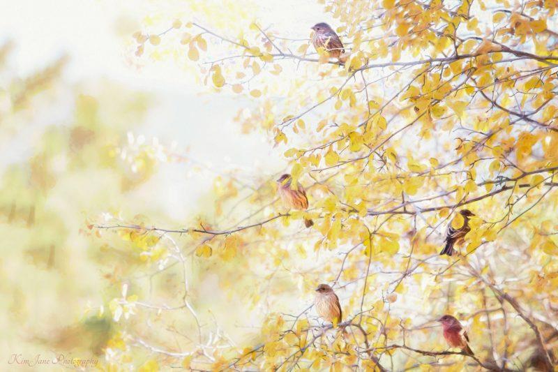 Fall Hangout