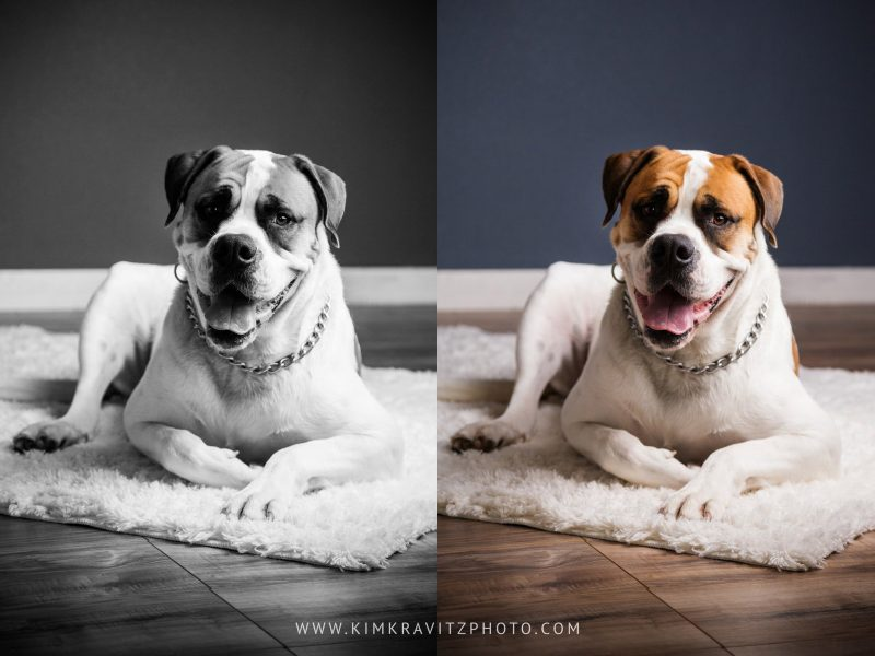 Bentonville Arkansas Pet Photography by Kim Kravitz