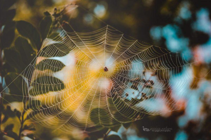 spiderweb-3-dp
