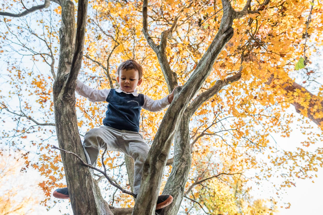 young boy in tree with colorful fall leaves