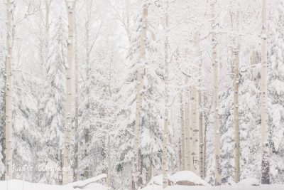 Snow Aspen Trees Katie Woodard