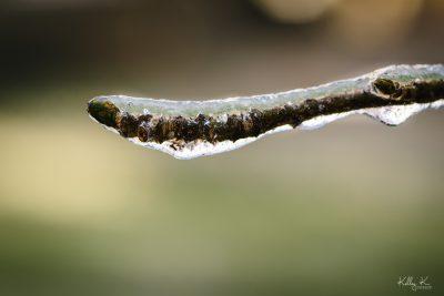 georgia-icestorm-by-KelleyKPhotography-Smyrna