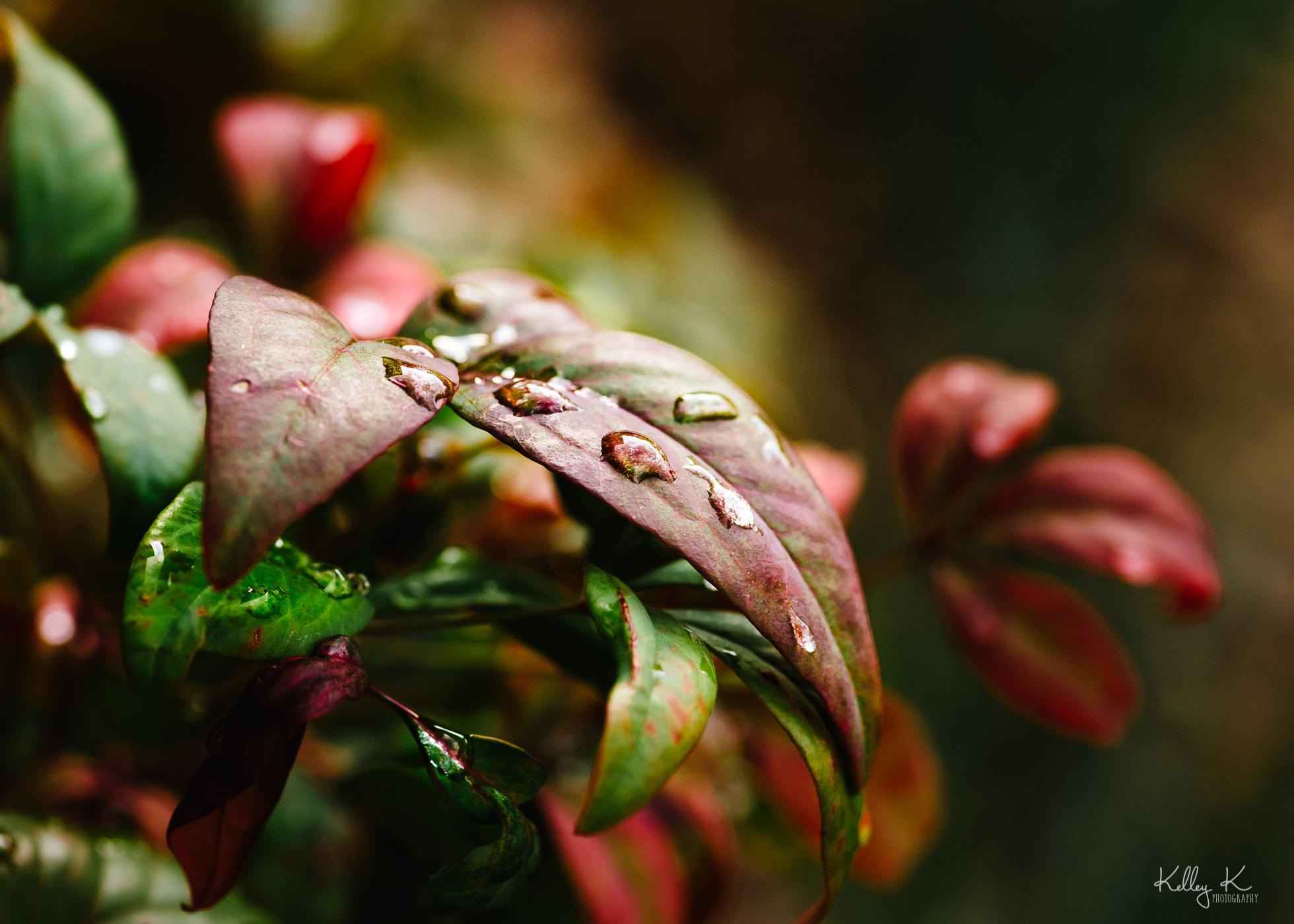raindrops-on-leaf-by-KelleyKPhotography-Smyrna