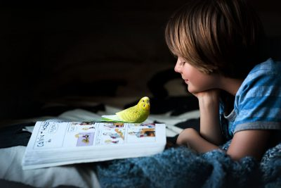 boy and his parakeet reading Calvin and Hobbes