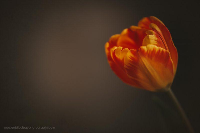 Jen Bilodeau Macro Flower
