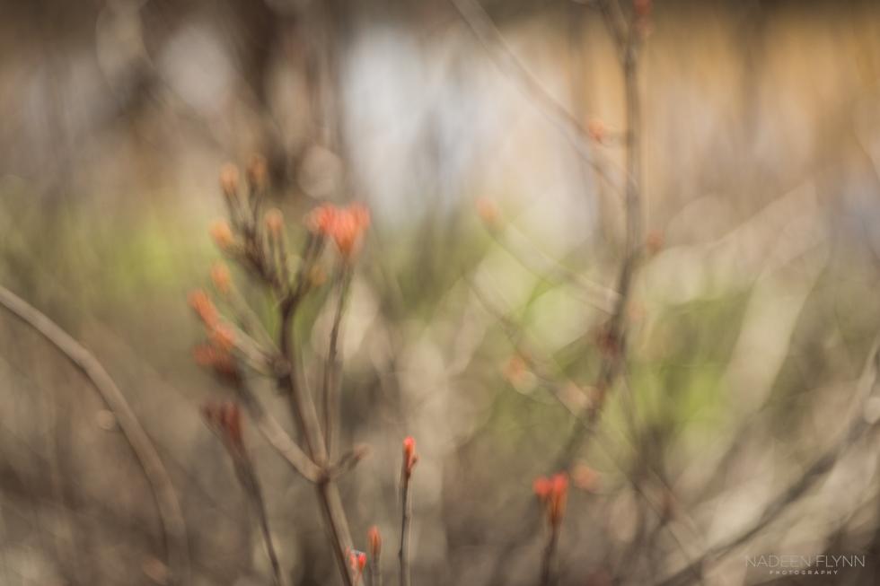 orange leaves emerging in spring out of focus season awakening