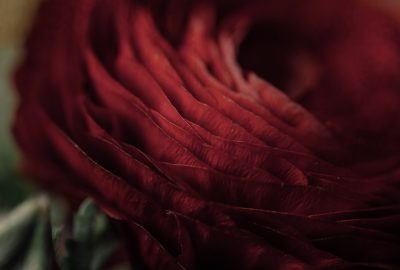 ebony-logins-clickin-moms-daily-project-wedding-victoria-bc-flower-red-layers-macro