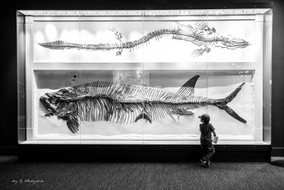 boy-looking-at-dinosaur-fish-skeleton-at-museum