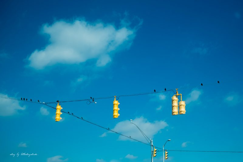 birds-on-wire-with-stop-lights