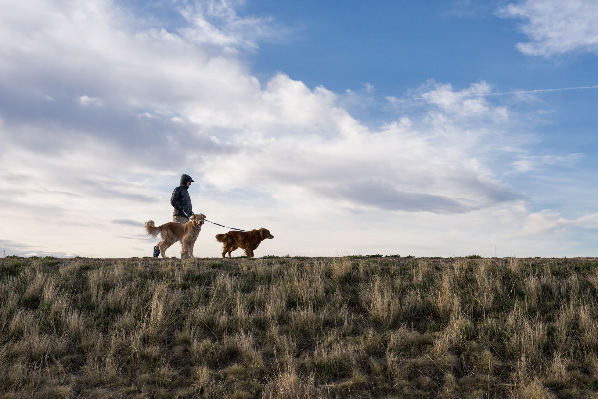 A man walks two dogs atop a reservoir ridge in Lowry (Denver), Colorado.