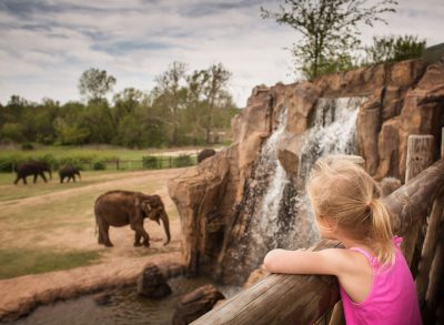 elephant watching girl child lifestyle photography edmond ok photographer oklahoma city natural light photographer kate luber photography
