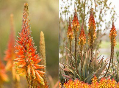 orange blossoms in botanic garden