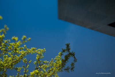 lensbaby-image-of-tree-and-architecture