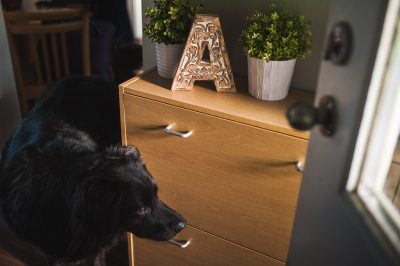 ebony-logins-clickin-moms-daily-project-wedding-victoria-bc-bernese-mountain-dog-black-lab-home-arrive