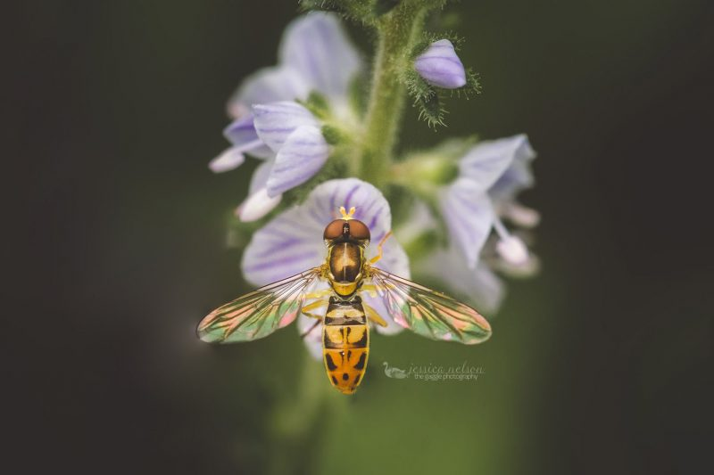 small bee macro