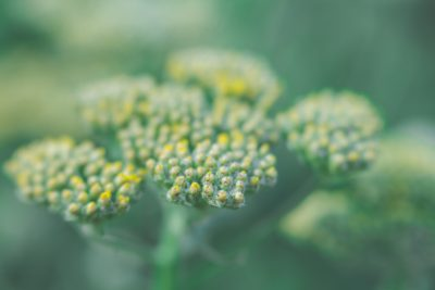 green yellow airy macro tiffany kelly