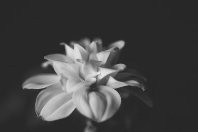 black and white flower image