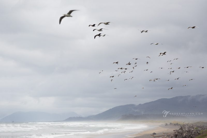 gulls flying overhead along the coast