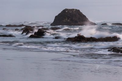 two gulls resting on a rock while the surf crashes at Seal Beach