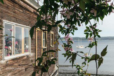 sailboat in wharf framed through floral vines