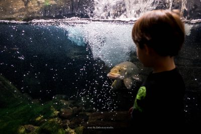 pittsburgh-family-photographer-28