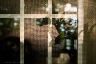 pittsburgh-family-photographer-45