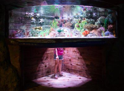 07 head in the sea aquarium lifestyle photography click pro daily edmond ok photographer oklahoma city photographer kate luber photography