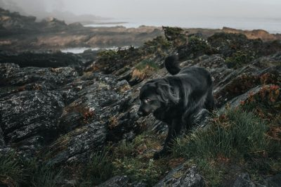 ebony-logins-clickin-moms-daily-project-wedding-victoria-bc-cooper-labernese-dog-beach-rocky