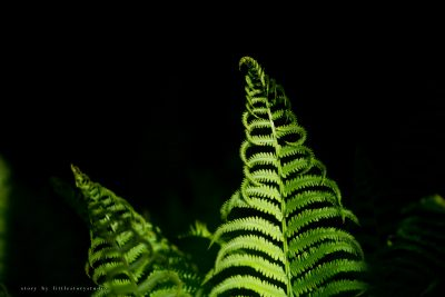 pittsburgh-photographer-fern
