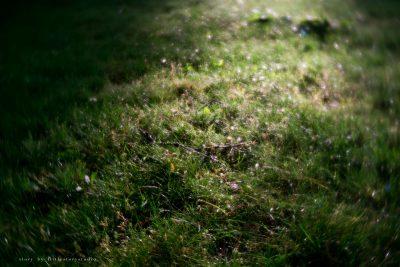 pittsburgh-photographer-lensbaby-velvet-bokeh