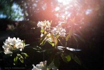 pittsburgh-photographer-lensbaby-velvet-flowers