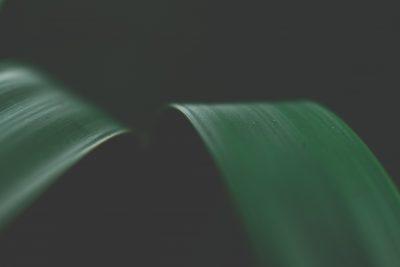 green leaf macro moody tiffany kelly
