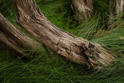 closeup view of textures in tree bark and tall grass